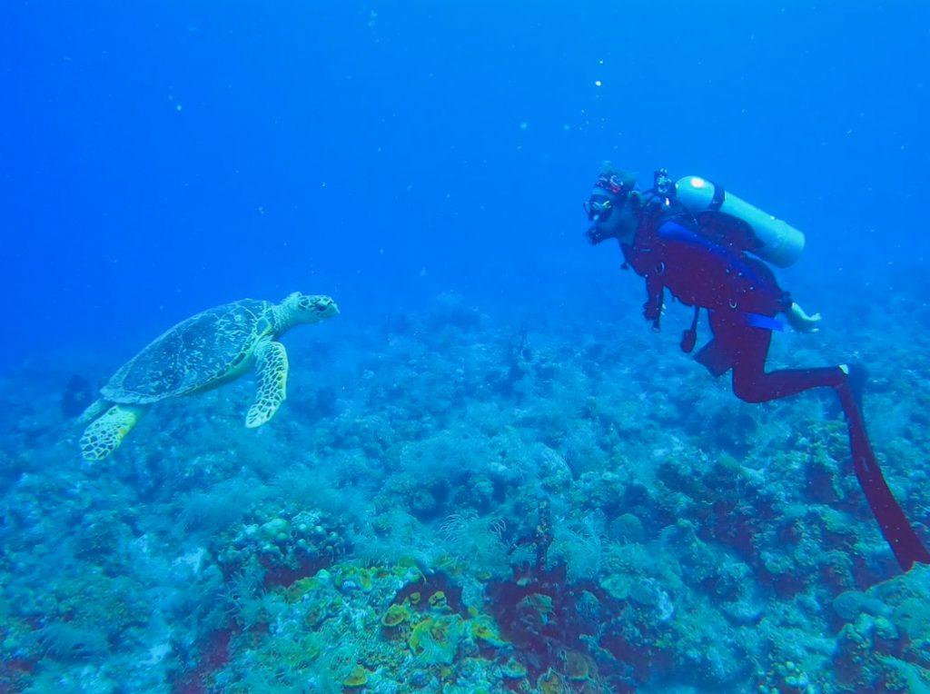 champs elysees catamaran diving