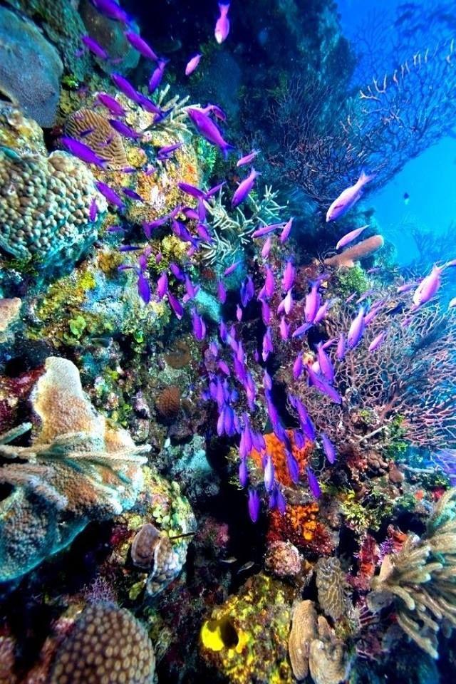 usvi reef diving